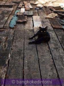 Simpatico gatto che, superato il timore iniziale, ha deciso di seguirmi per un po'!